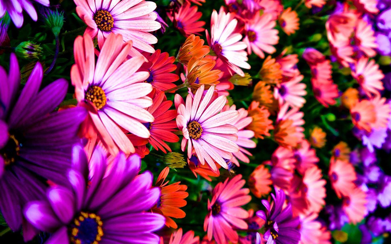 Vibrance mac wallpaper download allmacwallpaper for Immagini sfondo desktop primavera