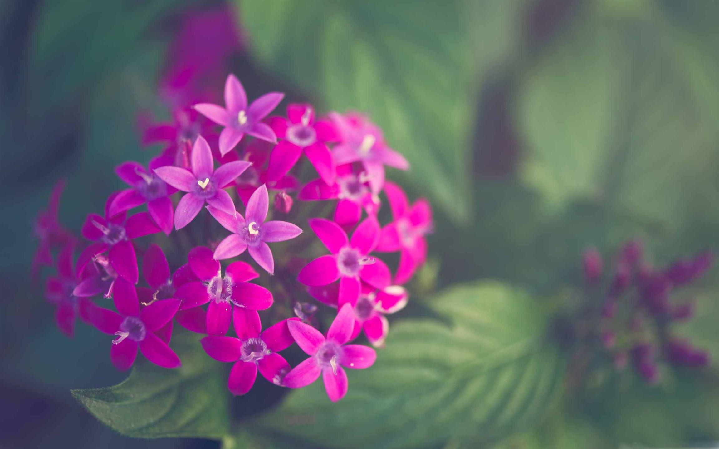 Purple Flower Mac Wallpaper Download | AllMacWallpaper