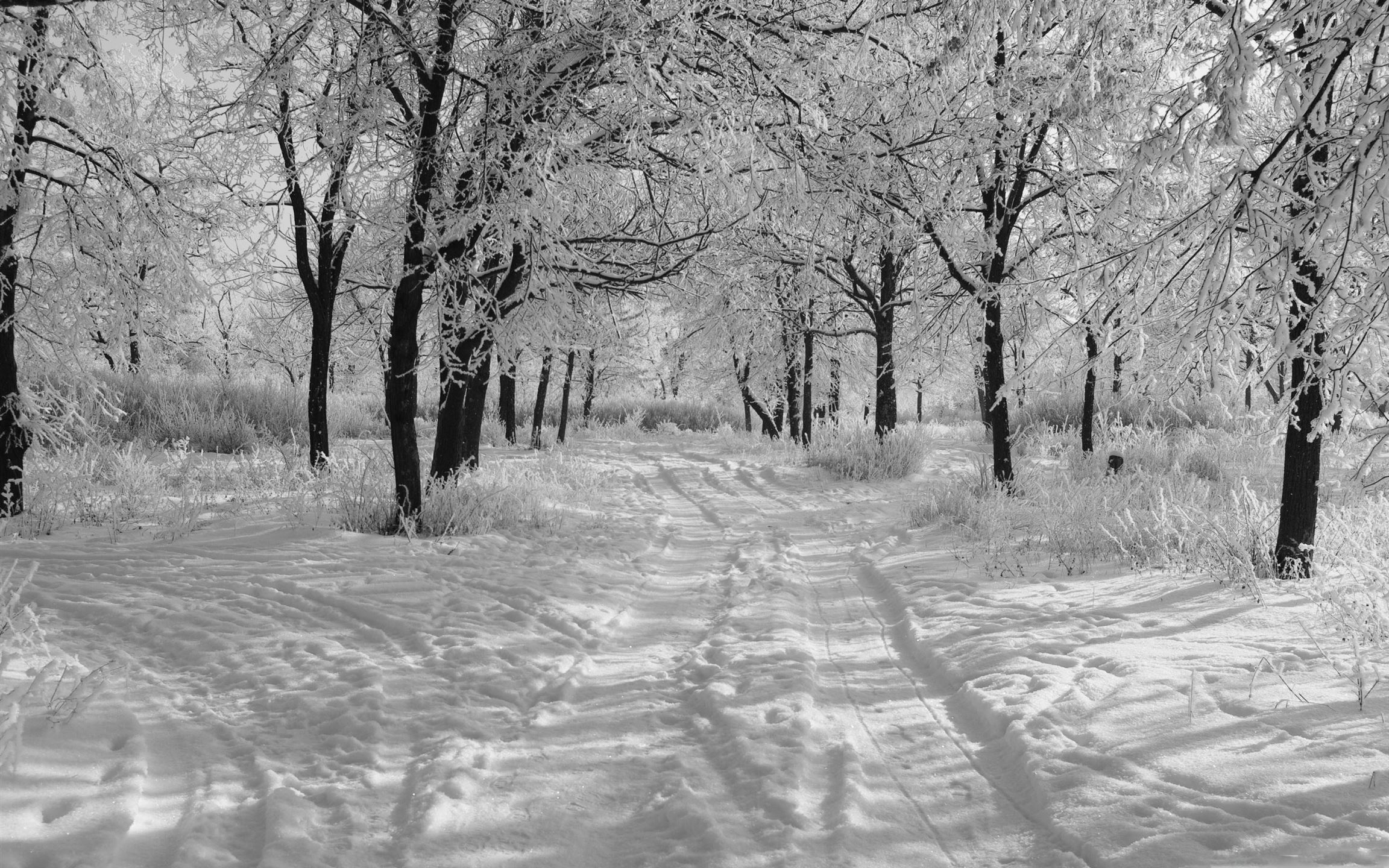 Trails In The Snow Winter Mac Wallpaper Download
