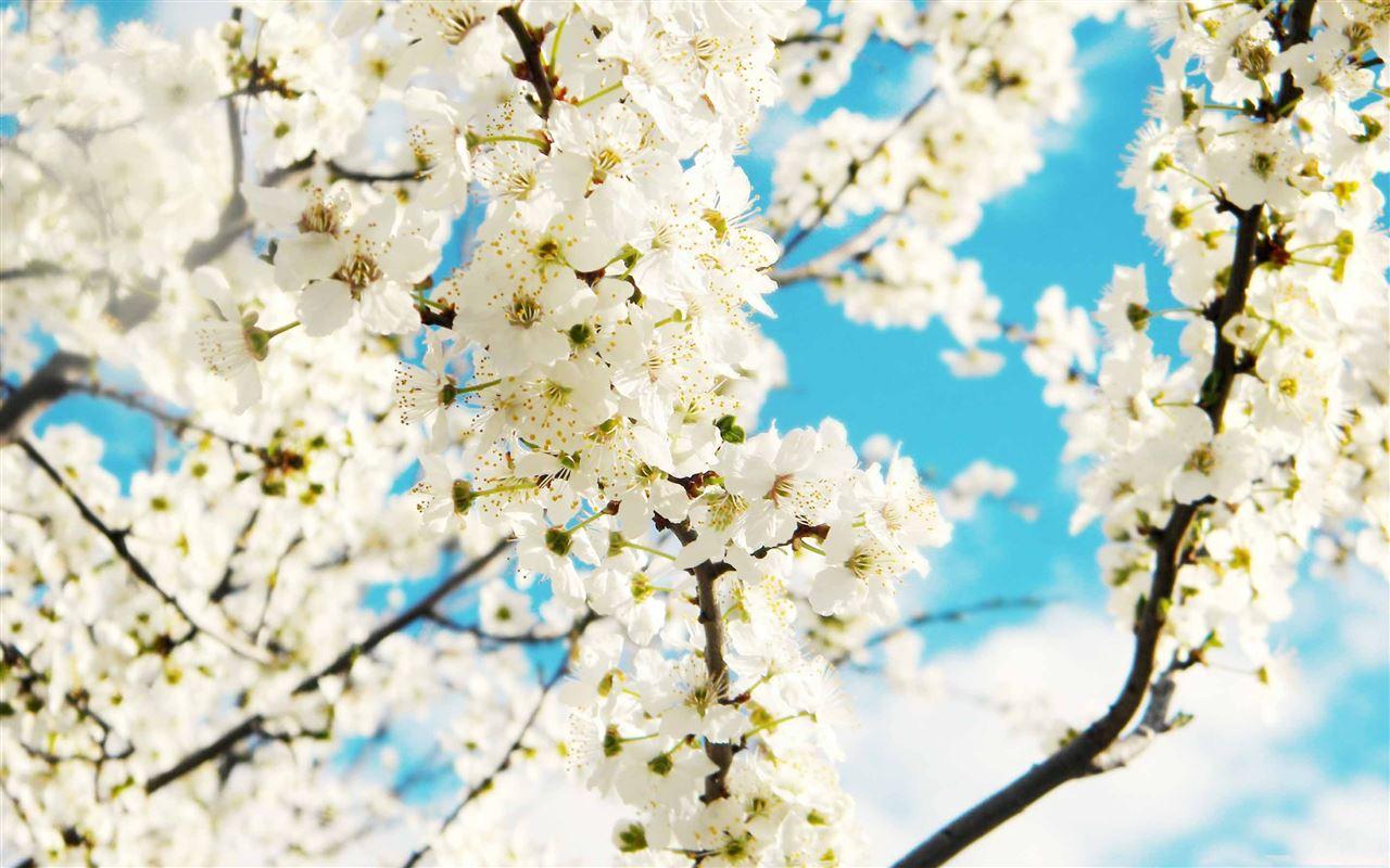 Spring Flower Mac Wallpaper Download Allmacwallpaper