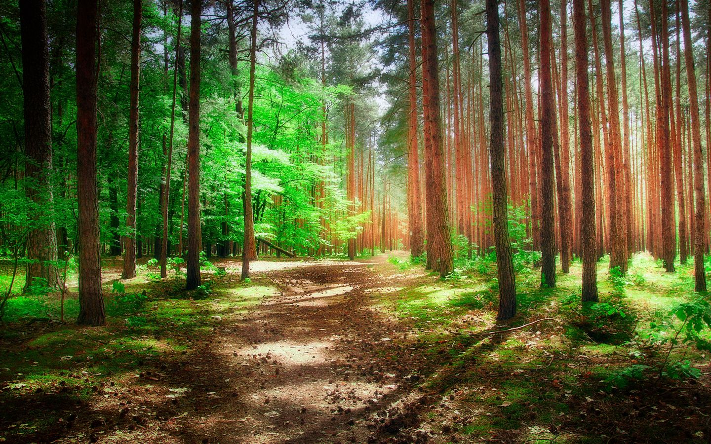The Woods In Morning Mac Wallpaper Download Allmacwallpaper
