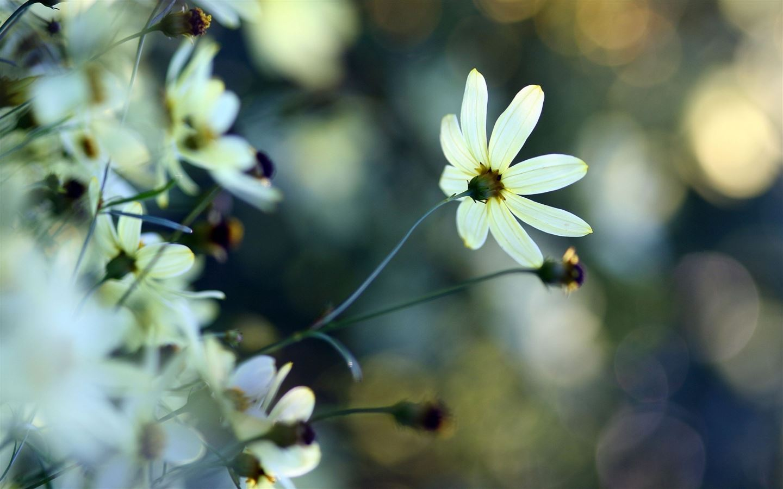 White small flowers mac wallpaper download free mac - Flower wallpaper macbook ...
