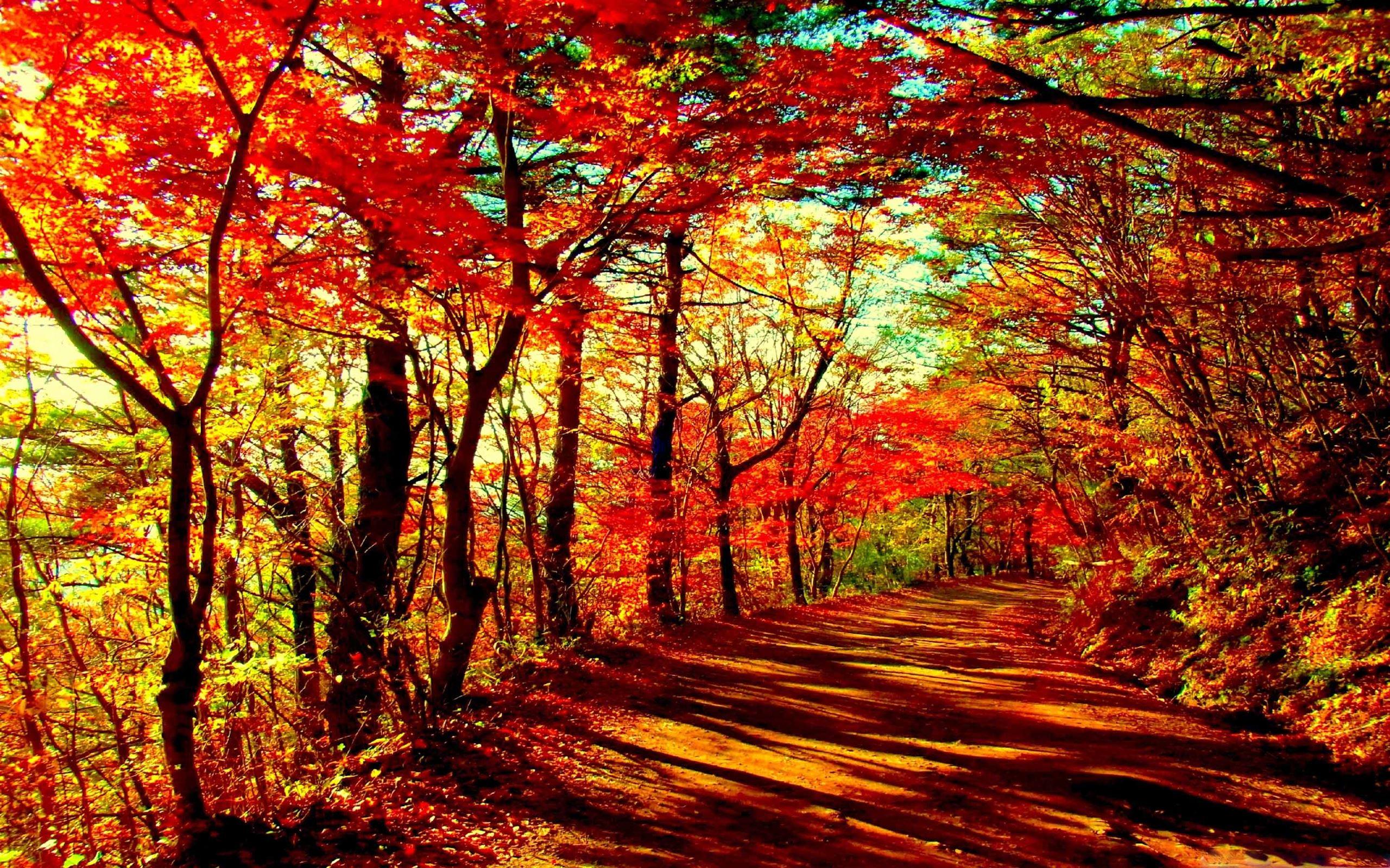 1000 Best Forest Mac Wallpapers Free Hd Download Allmacwallpaper