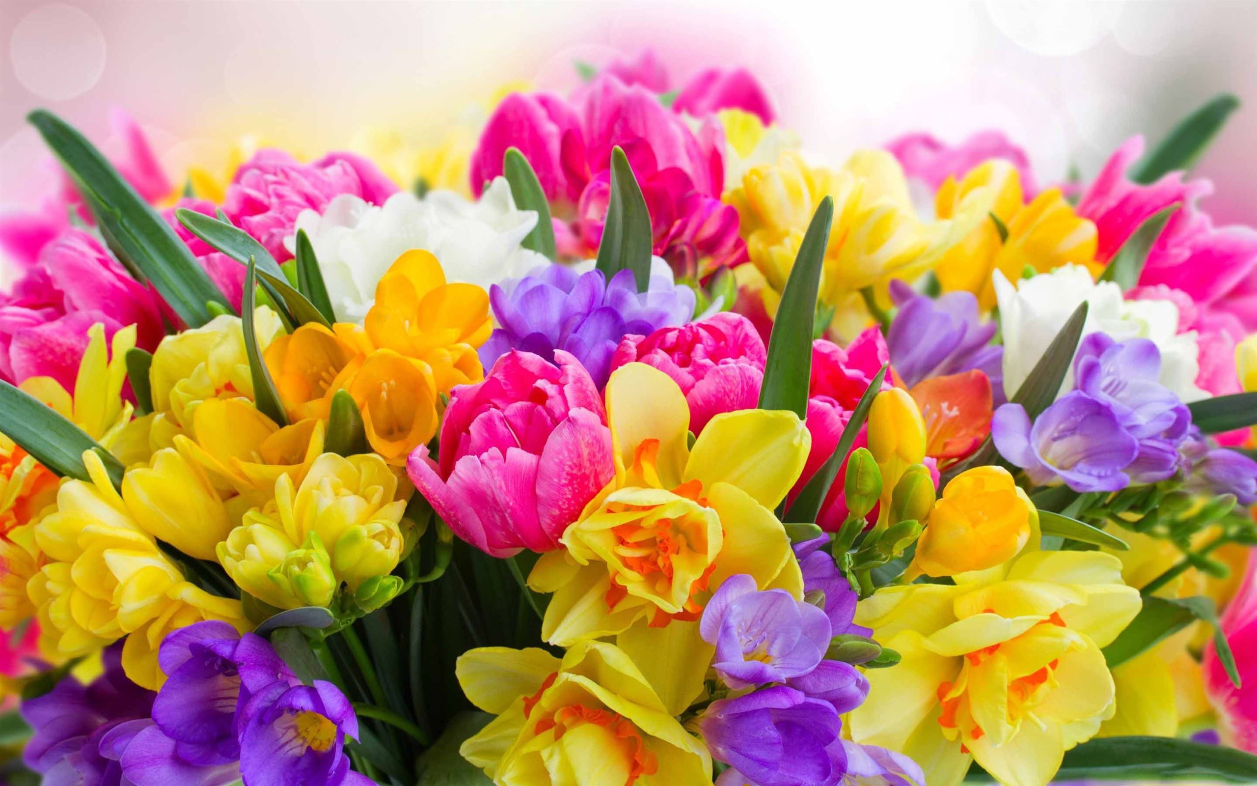 Beautiful Spring Flower Mac Wallpaper Download | AllMacWallpaper