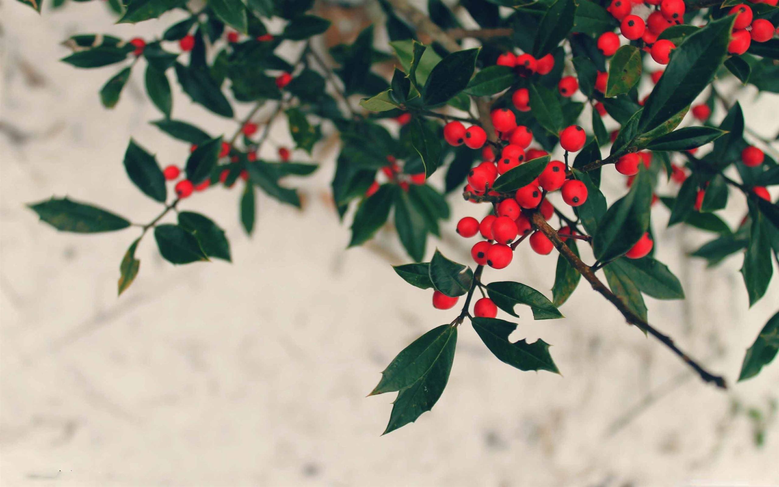 Berries Winter Mac Wallpaper Download