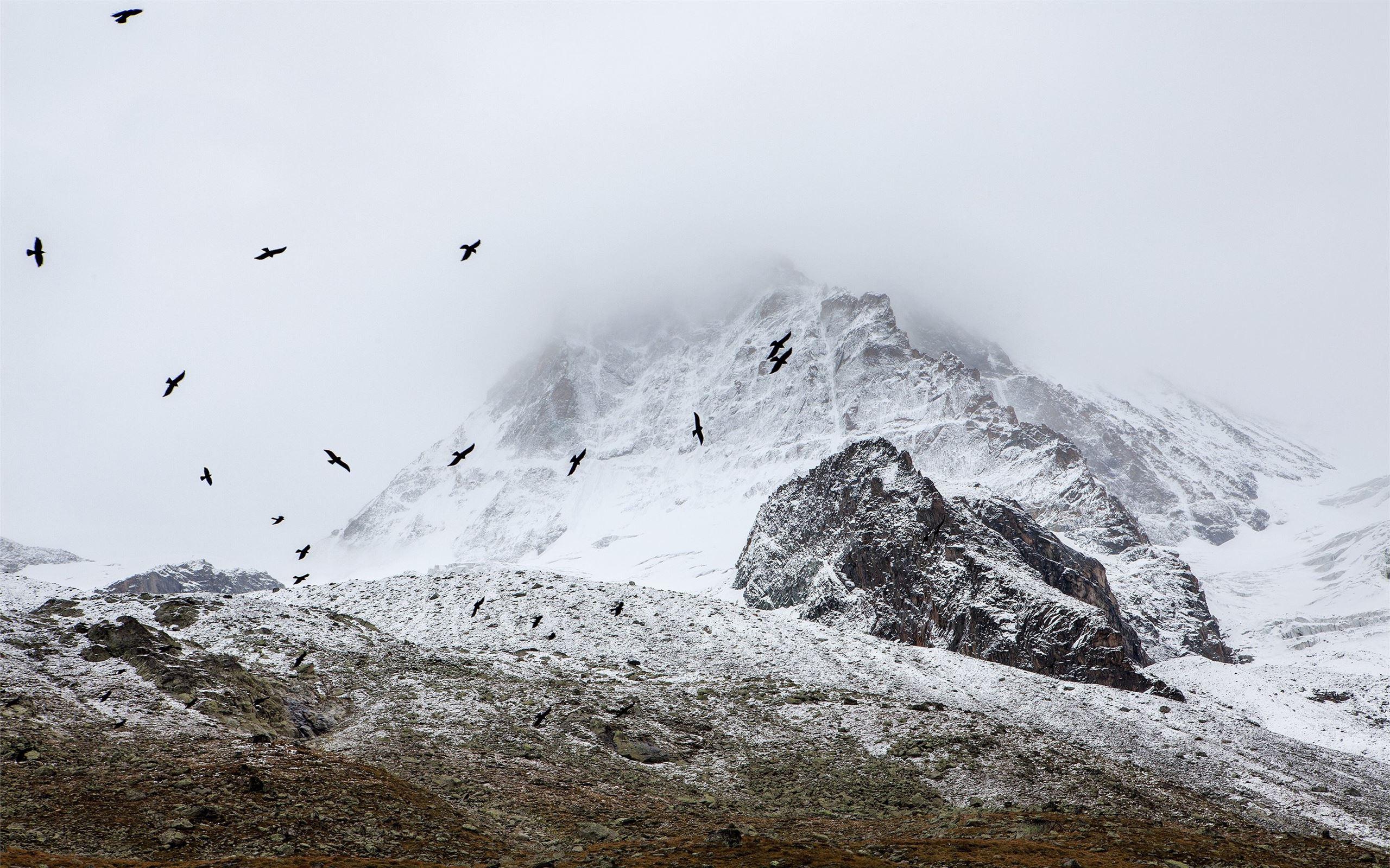 Birds Flocking In The Alp Mac Wallpaper Download Allmacwallpaper Images, Photos, Reviews