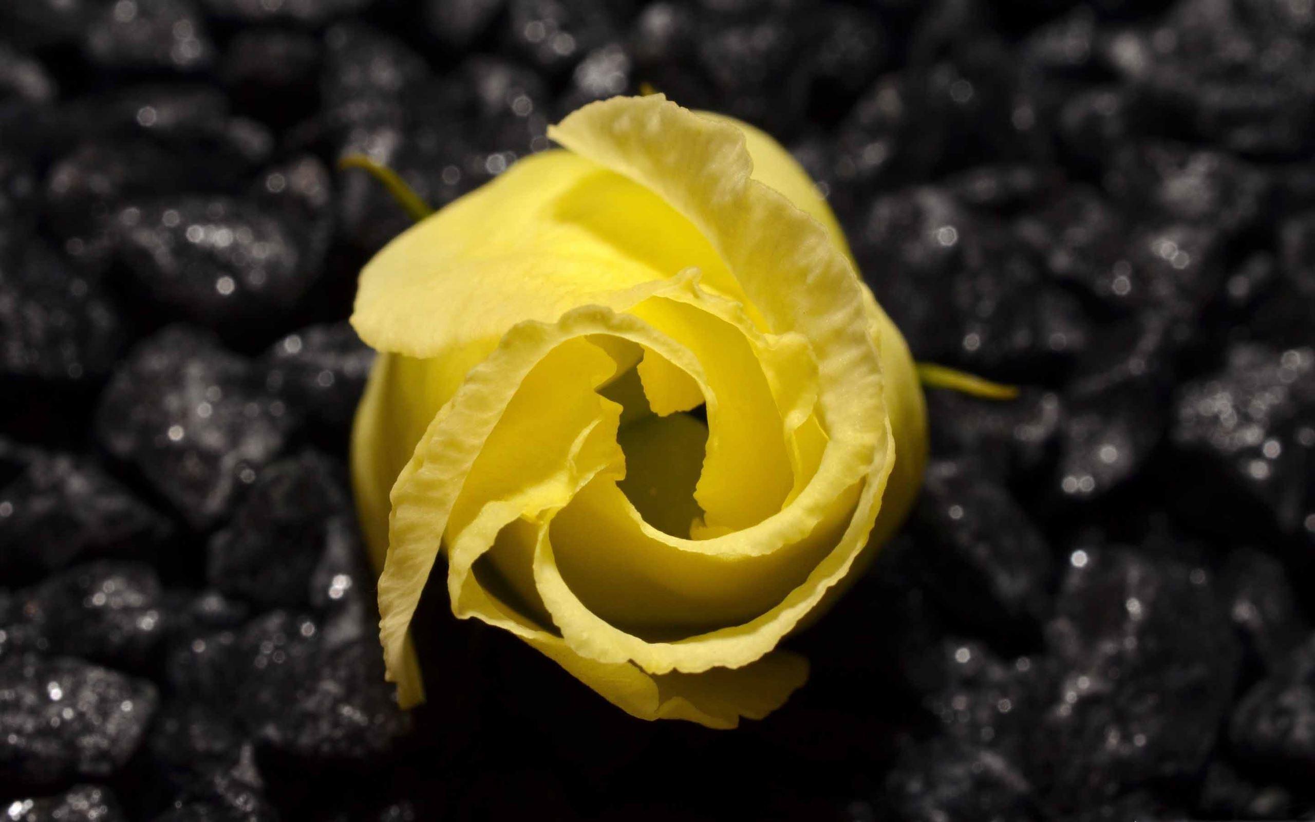 Yellow Flower Black Background Macbook Air Wallpaper Download Allmacwallpaper