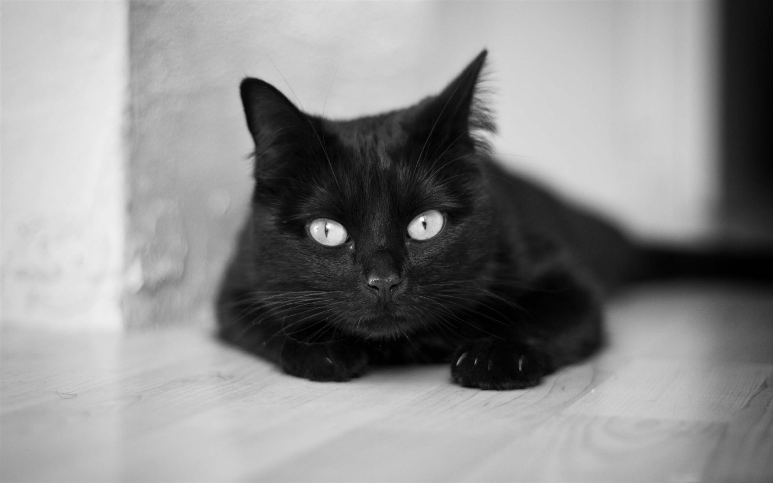 Black And White Cat Mac Wallpaper Download Allmacwallpaper
