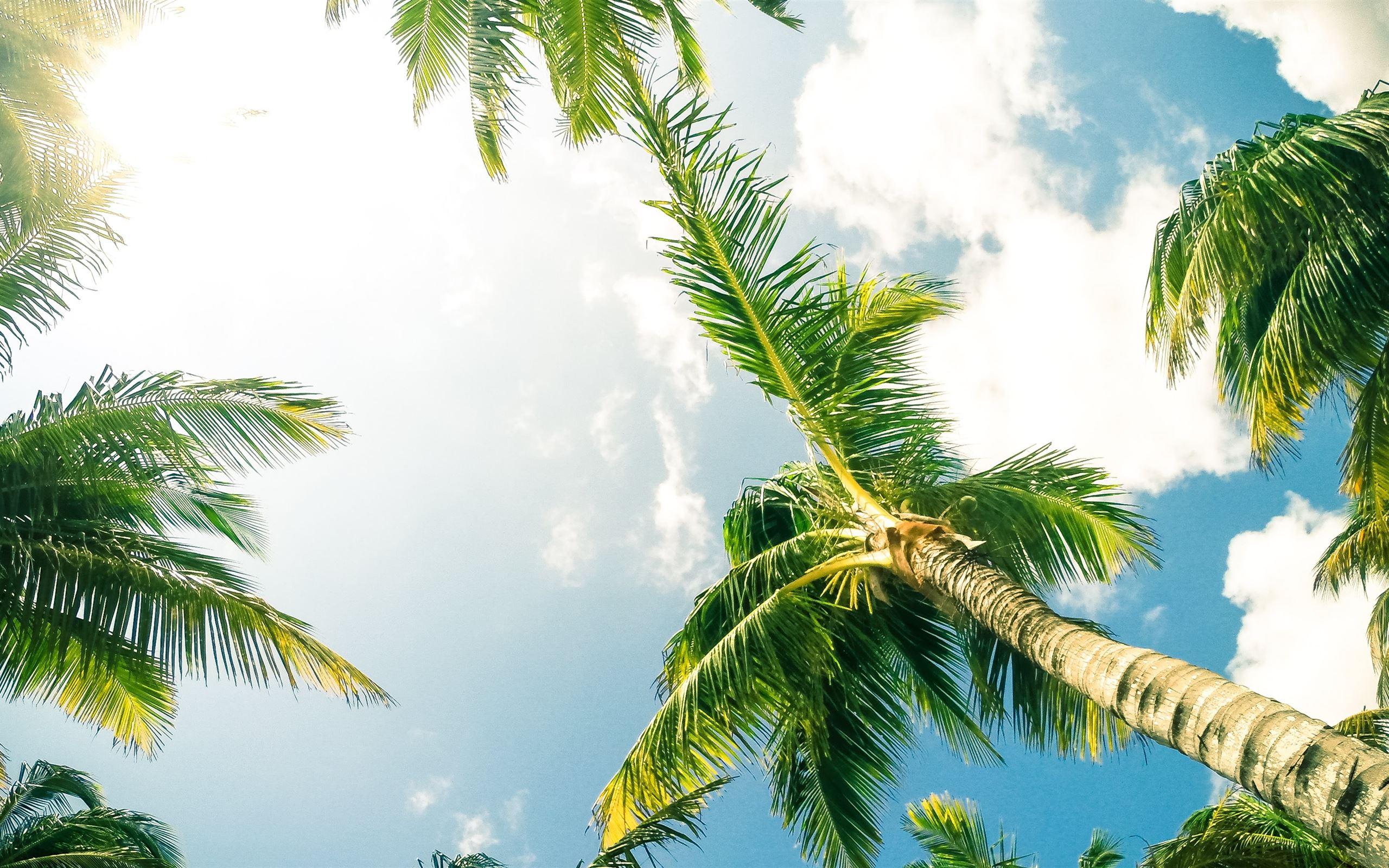 Green Coconut Palm Trees Macbook Pro Wallpaper Download Allmacwallpaper