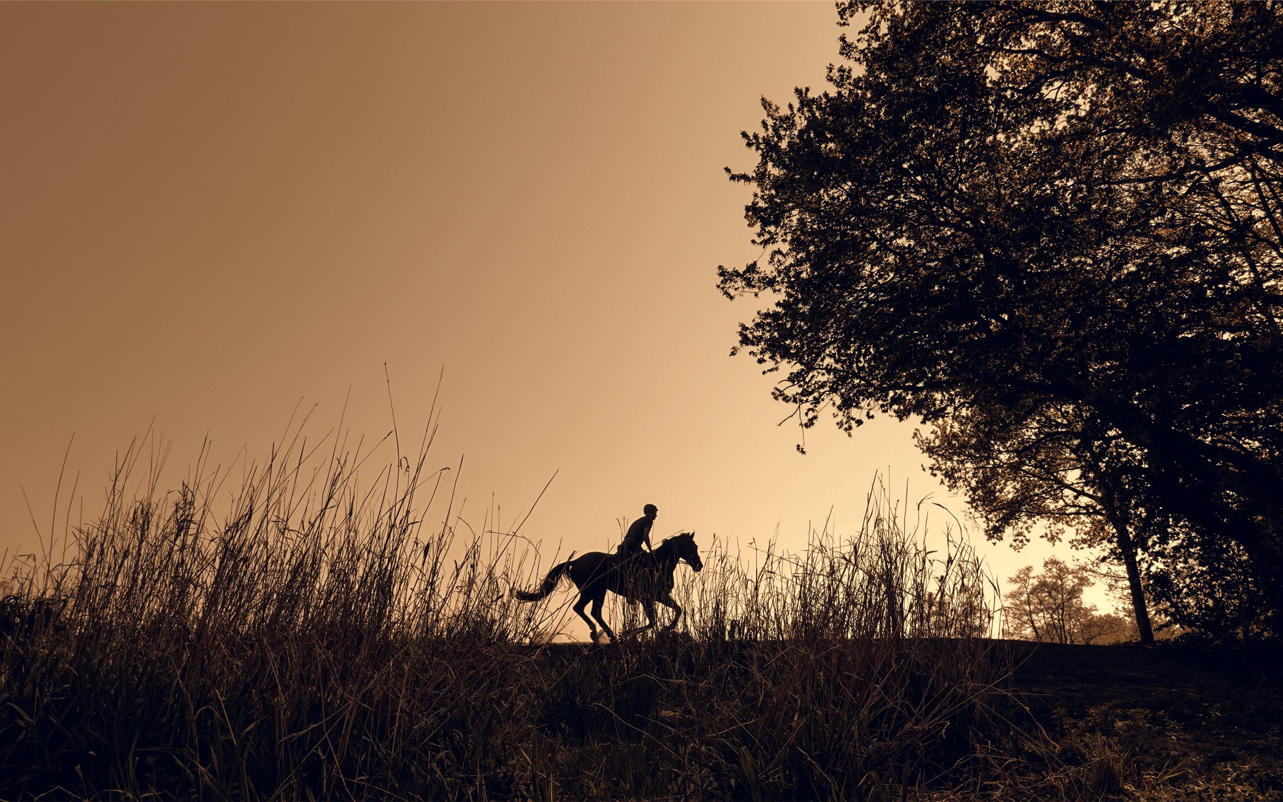 Silhouette Of Person Riding Horse Macbook Air Wallpaper Download Allmacwallpaper