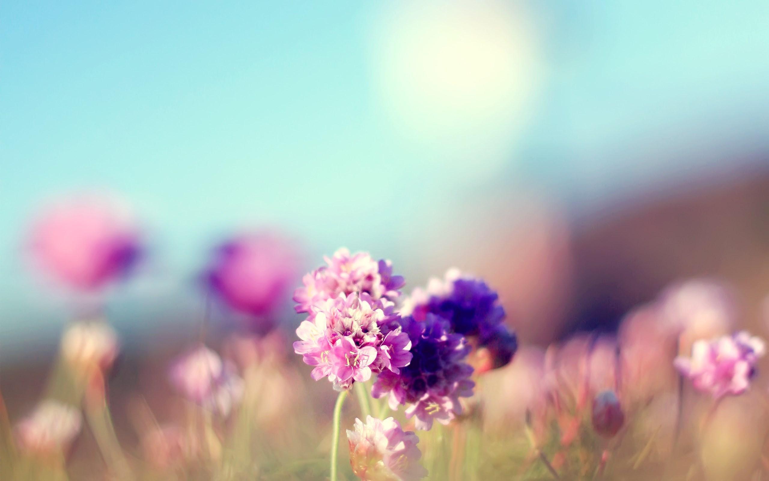 Flowers Field Nature Sunny Mac Wallpaper Download
