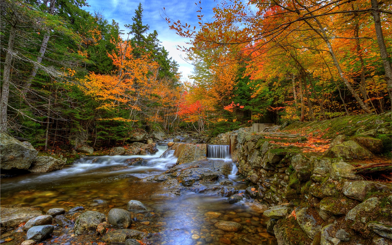 Autumn Woods Mac Wallpaper Download | Free Mac Wallpapers ...