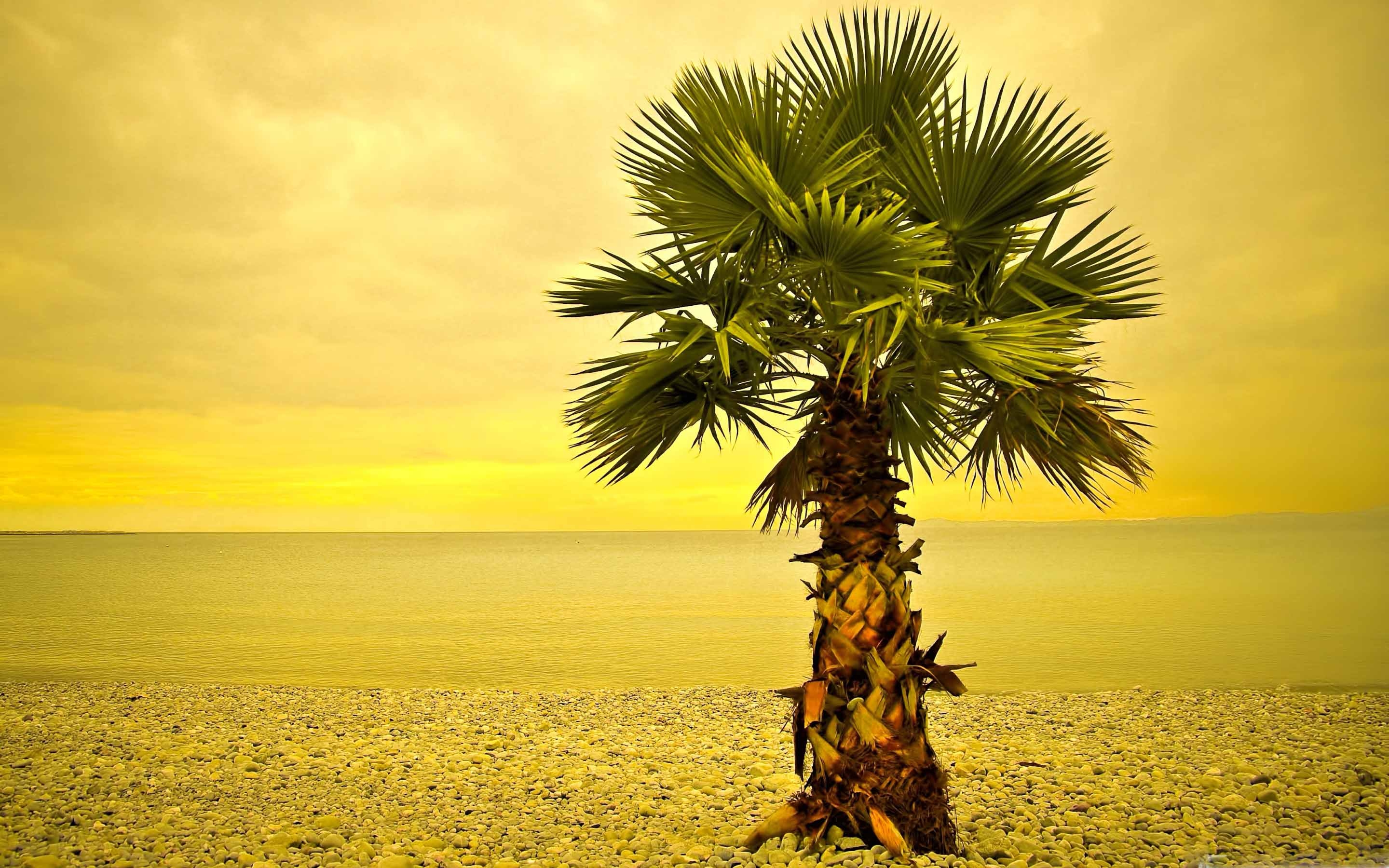 Beach Palm Tree Mac Wallpaper Download | Free Mac ...