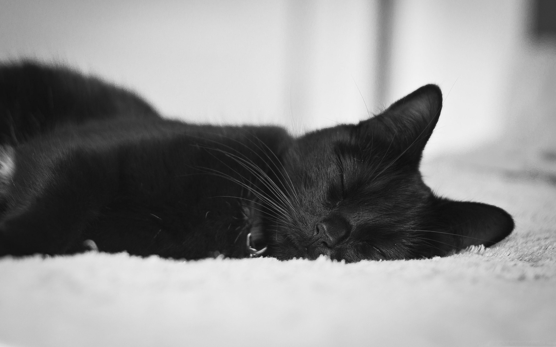 Black Cat Mac Wallpaper Download Free Mac Wallpapers Download