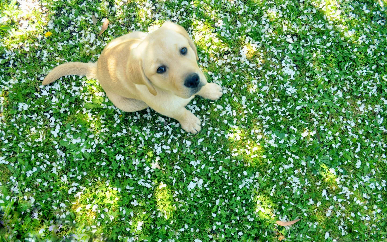 Dog And Spring Mac Wallpaper Download Free Mac Wallpapers Download
