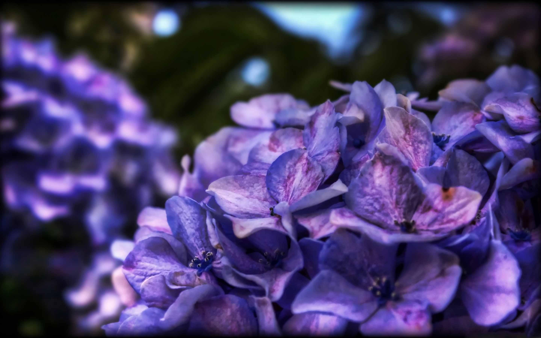 Dreamy Purple Flower Mac Wallpaper Download | AllMacWallpaper