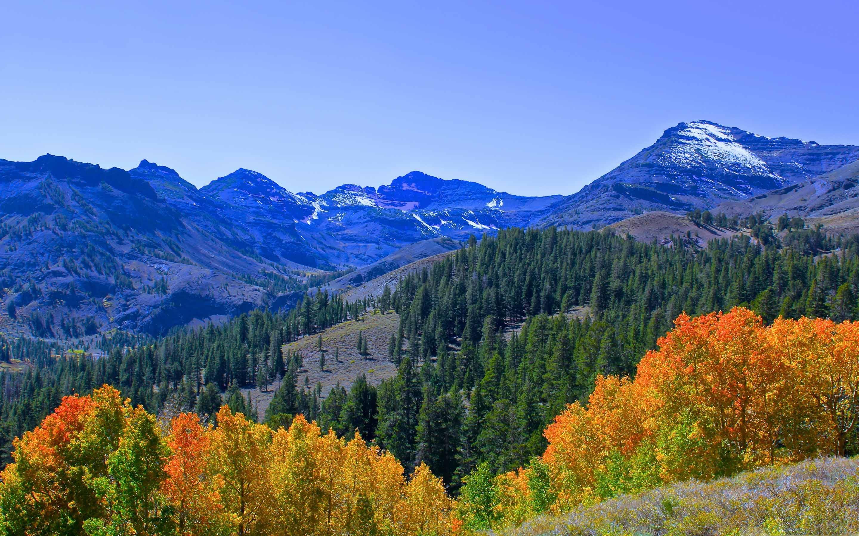 Fall Colors In The Sierra Mac Wallpaper Download