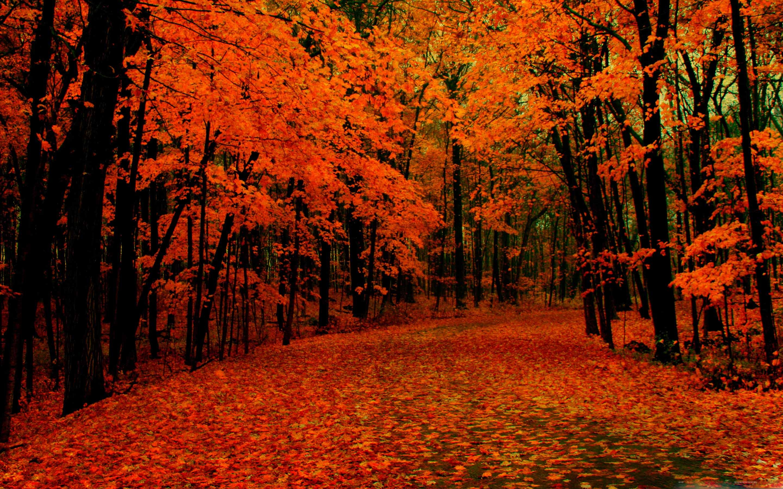 Fall Path Mac Wallpaper Download
