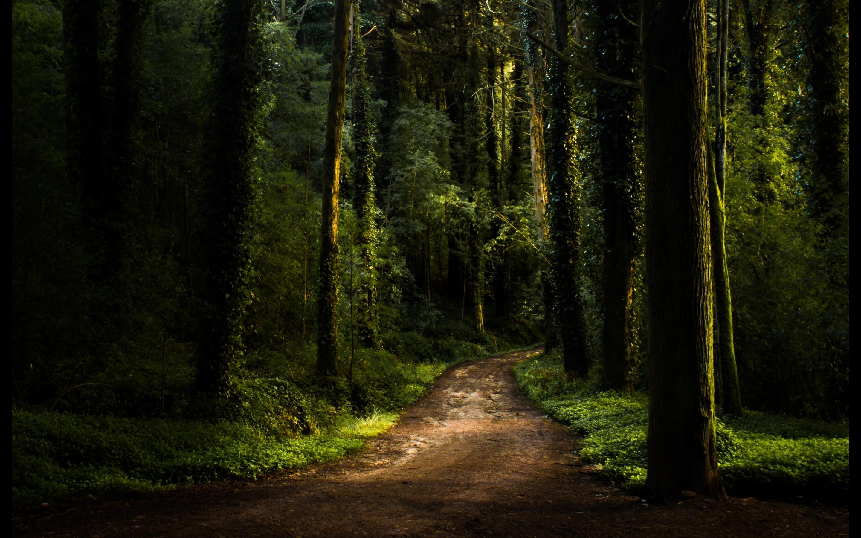 Forest Fam Mac Wallpaper Download Allmacwallpaper