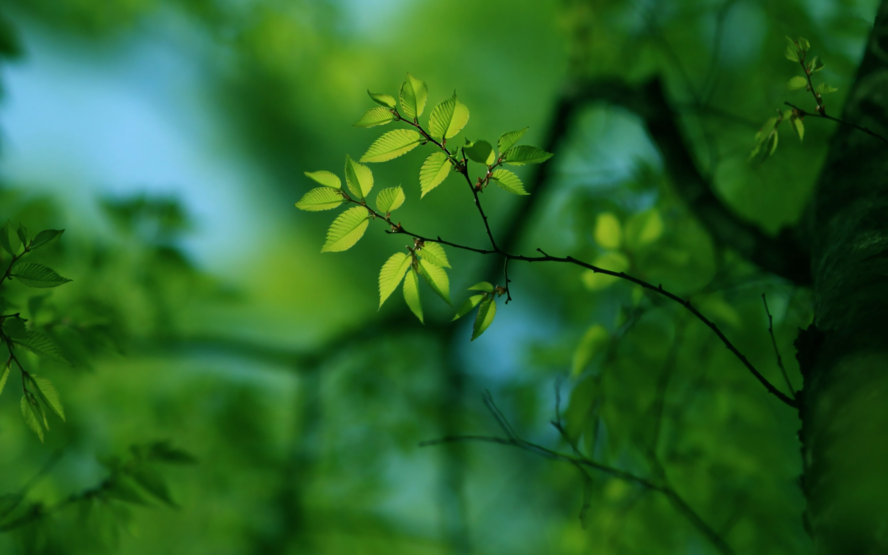 Green Tree Mac Wallpaper Download | Free Mac Wallpapers ...