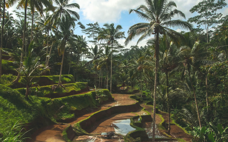 Rice Fields of Bali Mac Wallpaper Download | AllMacWallpaper