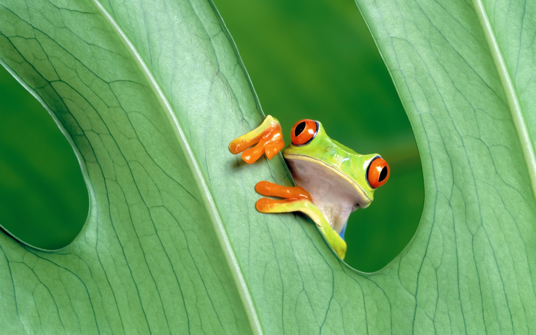 The Frog Prince Mac Wallpaper Download Allmacwallpaper