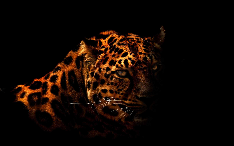 The Leopard Mac Wallpaper Download Allmacwallpaper