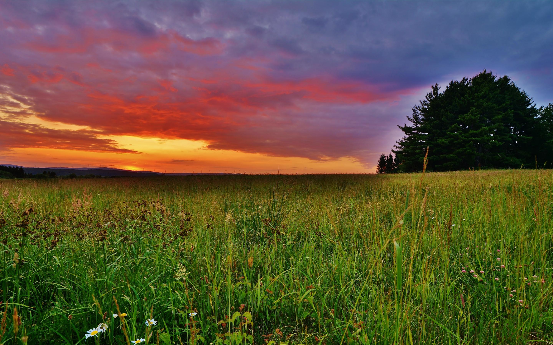 The sunset of grassland Mac Wallpaper Download ...