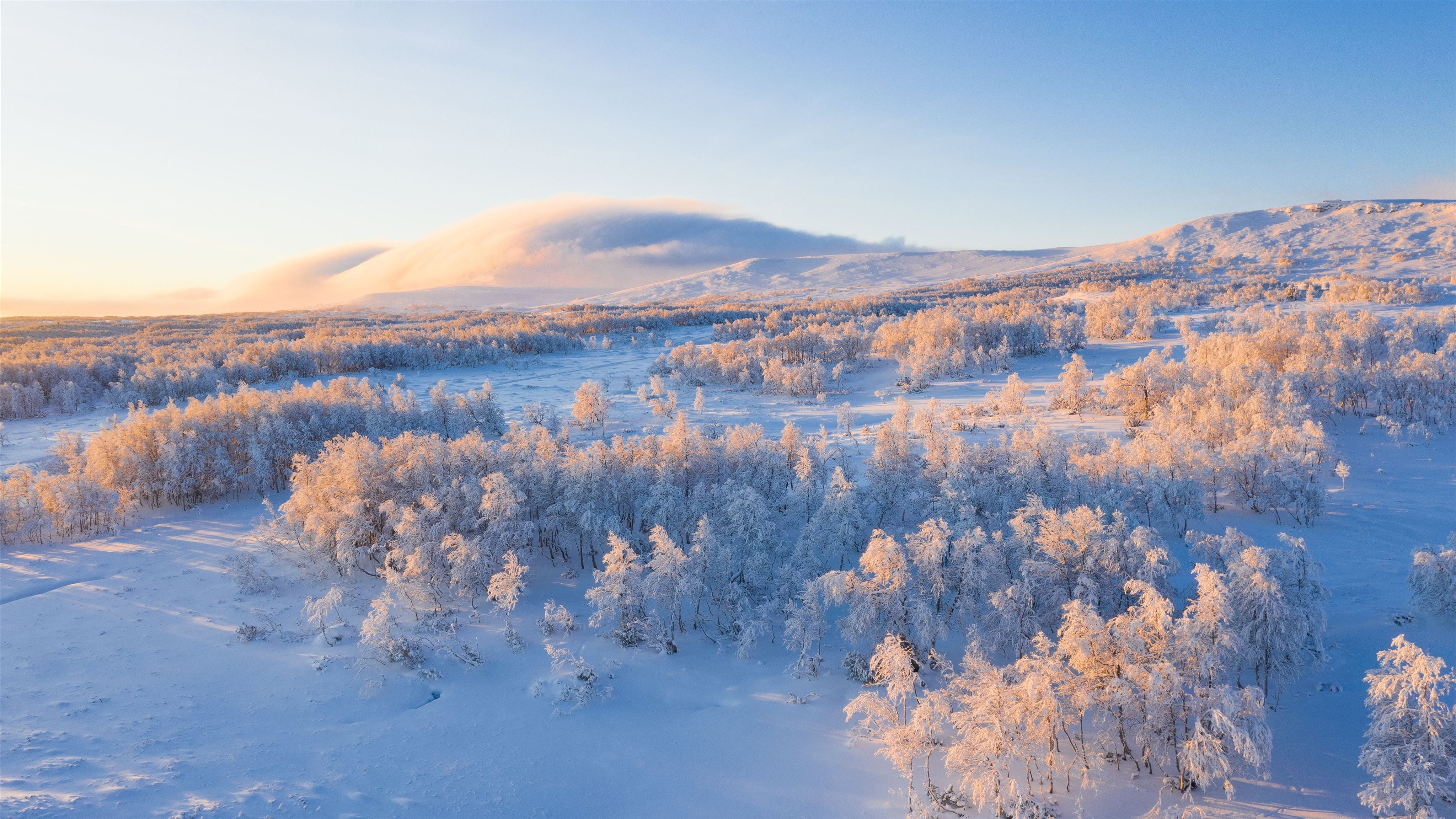 Aerial View Of Snow Covered Trees Mac Wallpaper Download