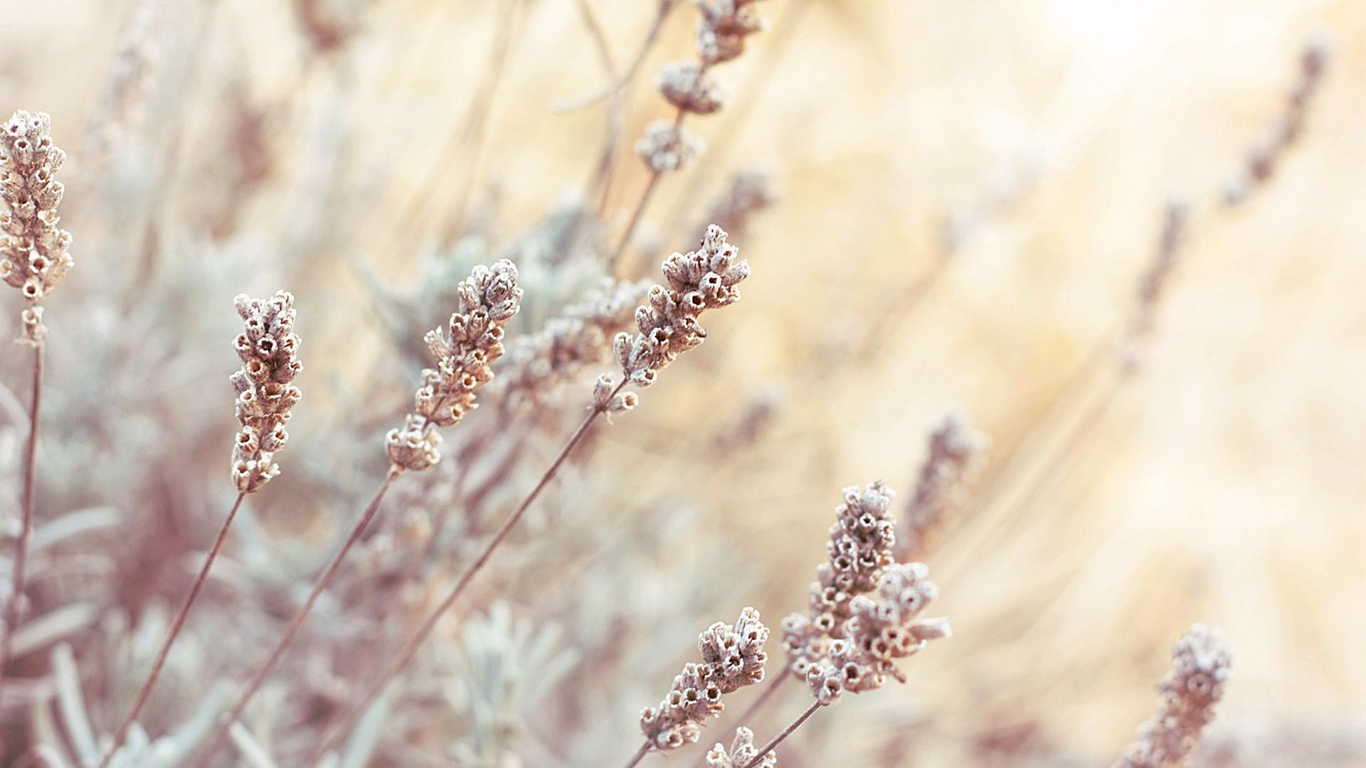 Bright depth of field plants Mac Wallpaper Download | Free ...