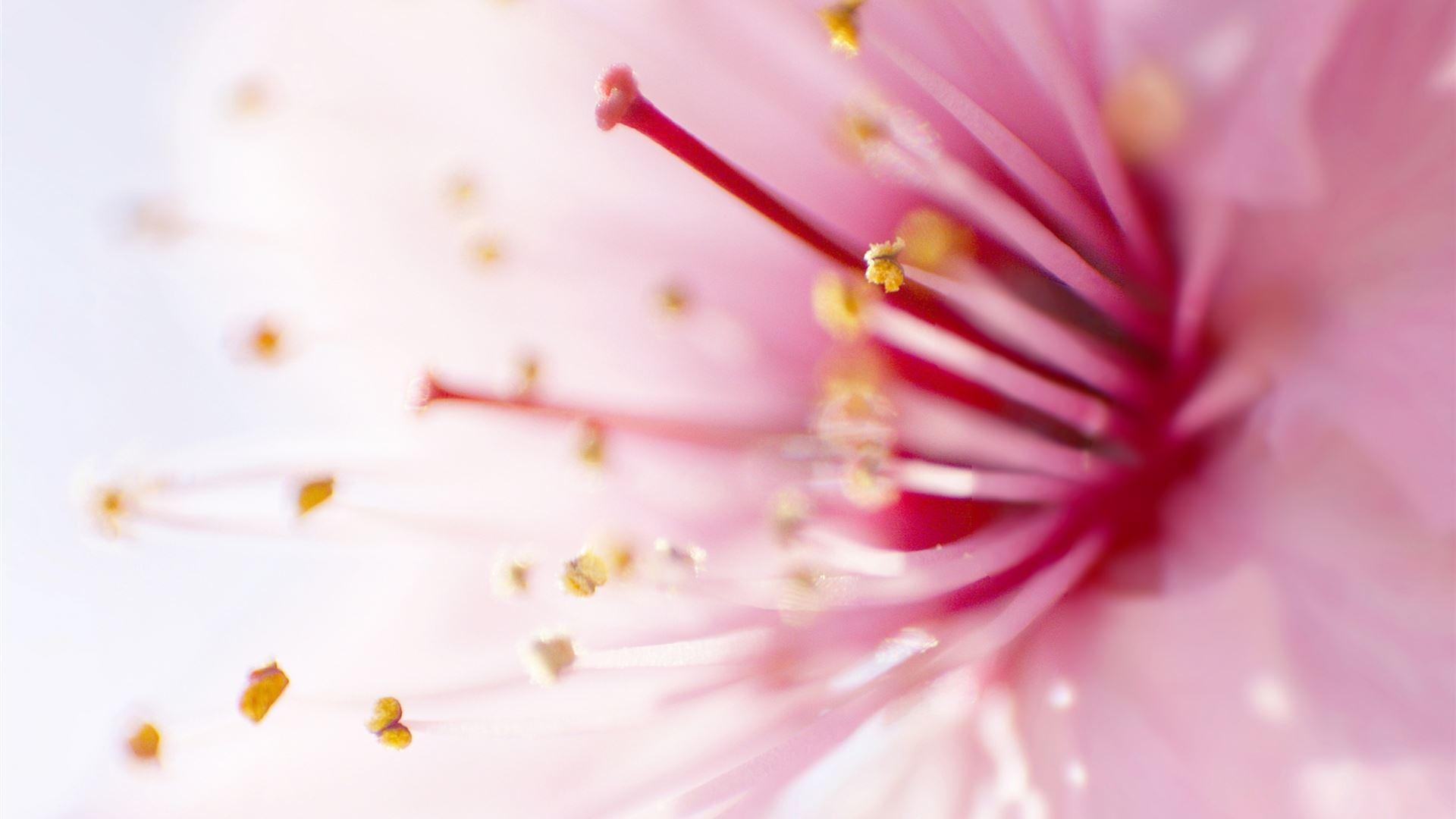 Pink Flowers 10 Mac Wallpaper Download Allmacwallpaper