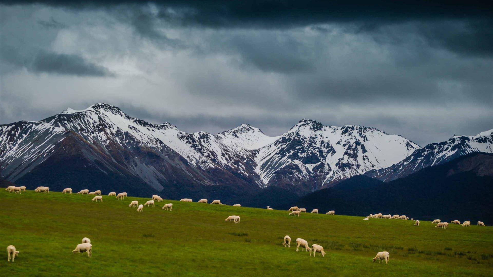 Sheep On Mountain pasture Mac Wallpaper Download | Free ...