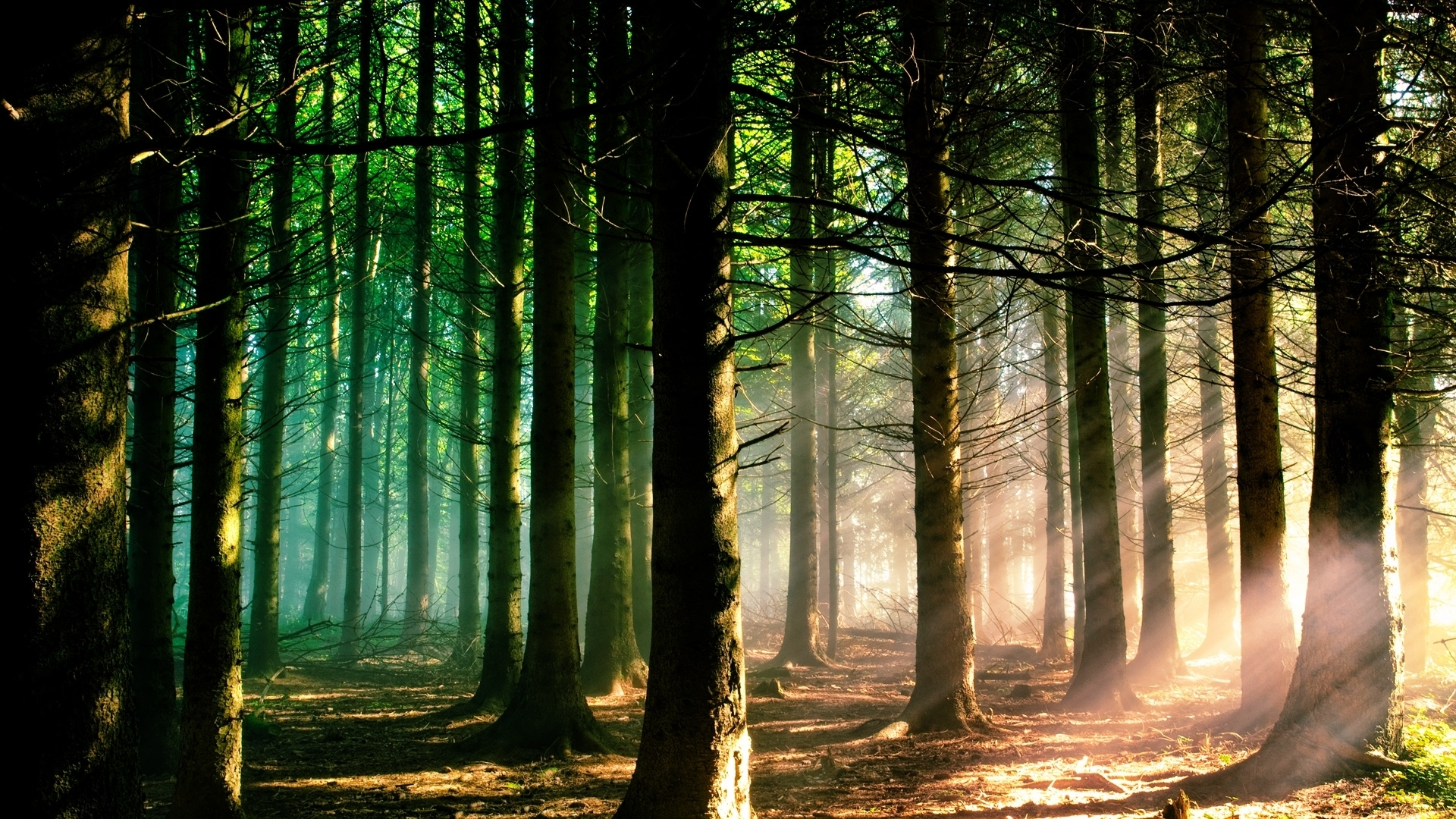 Sunshine Forest Macbook Air Wallpaper Download Allmacwallpaper