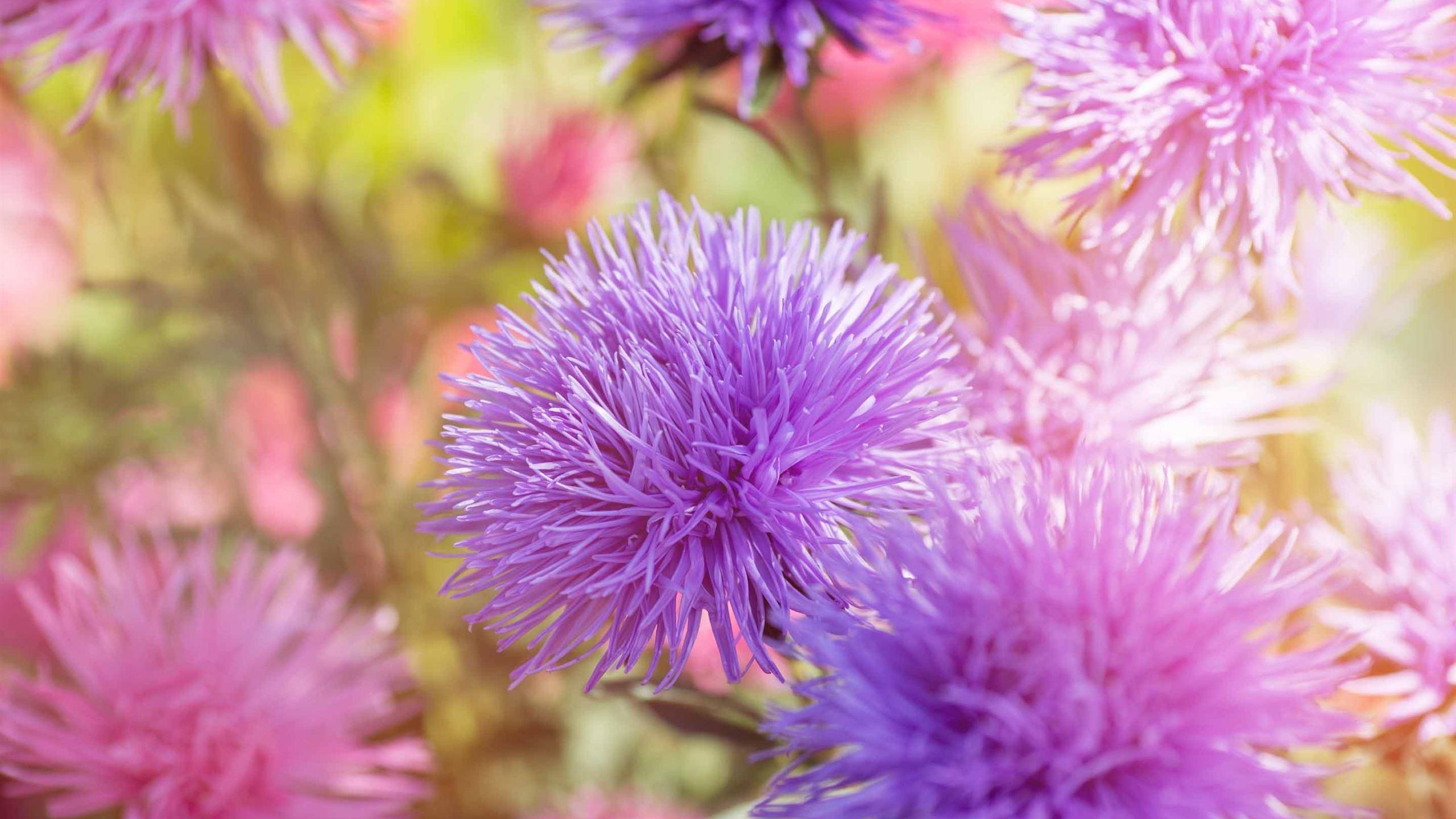 Purple Fluffy Flowers Mac Wallpaper Download | AllMacWallpaper