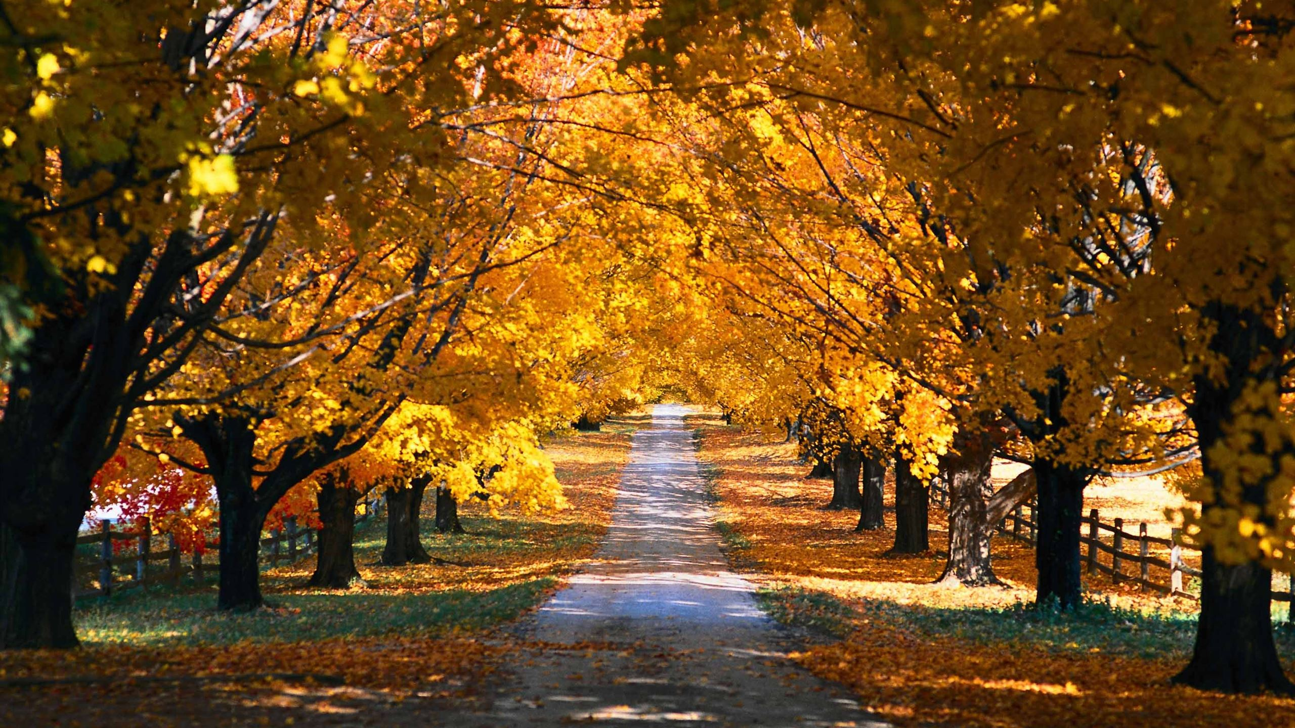 Tree Tunnel Road Autumn Mac Wallpaper Download Allmacwallpaper