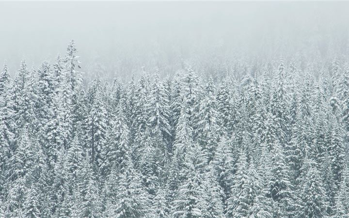 Snow covered tree landscape iMac wallpaper