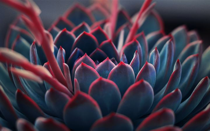 close up photography of succulent plant iMac wallpaper
