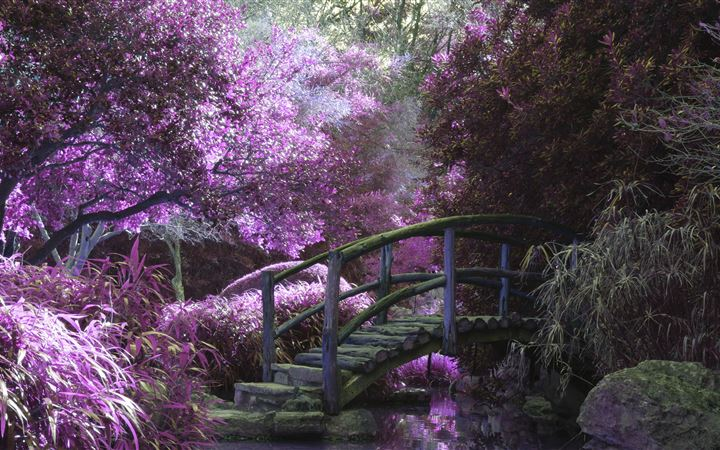 magical garden 5k iMac wallpaper