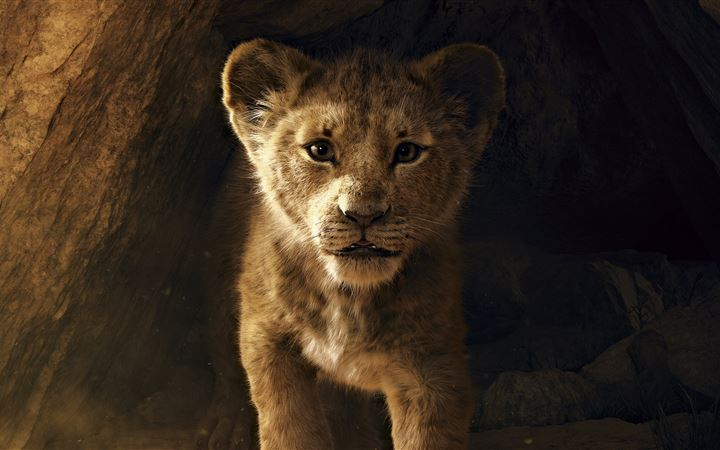 the lion king 2019 8k iMac wallpaper