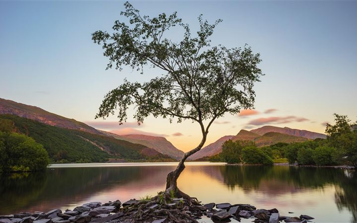 tree near lake during daytime 8k iMac wallpaper