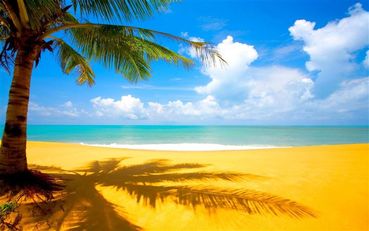 Beach Palm Trees All Mac wallpaper