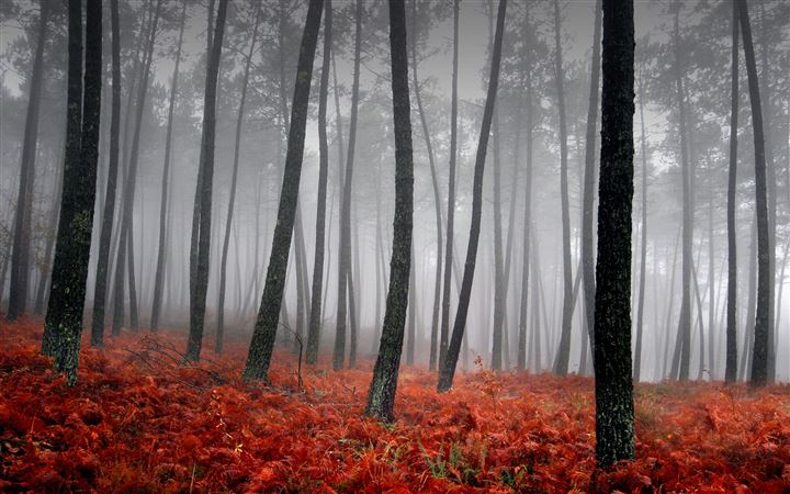 Beautiful forest All Mac wallpaper