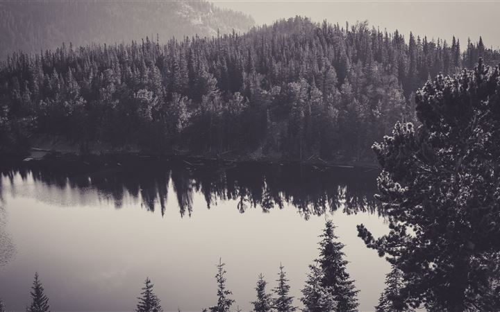 trees water monochrome reflection 8k All Mac wallpaper
