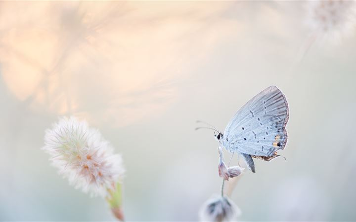 Airy Butterfly All Mac wallpaper