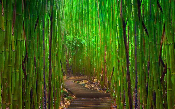 Bamboo forest All Mac wallpaper
