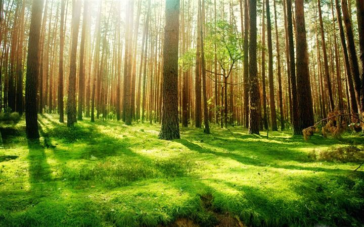 Beautiful Forest Scenery All Mac wallpaper