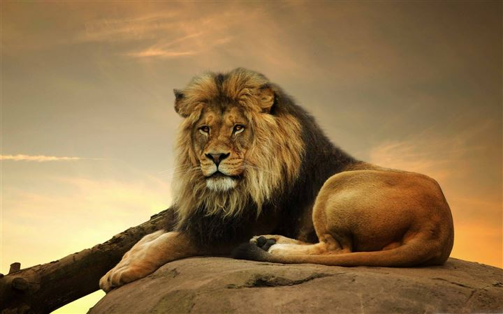 Big Lion On Stone All Mac wallpaper