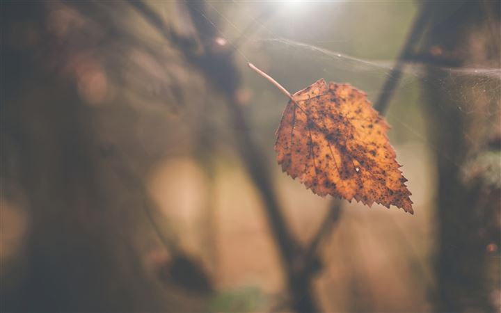 Birch leaf autumn All Mac wallpaper