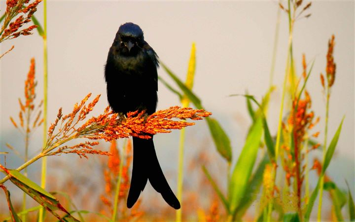 Bird Shoaib Photography All Mac wallpaper