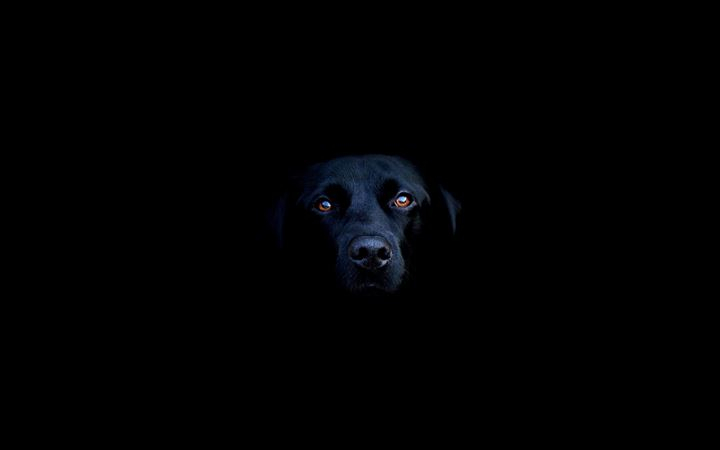 Black Dog All Mac wallpaper